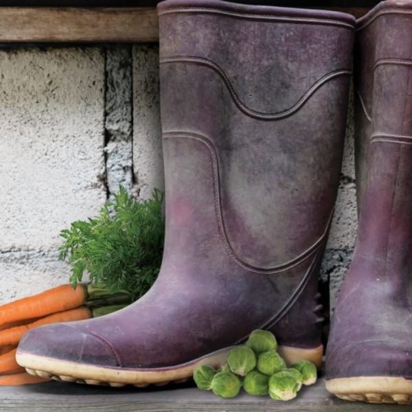 BASF welly boots, carrots and sprouts